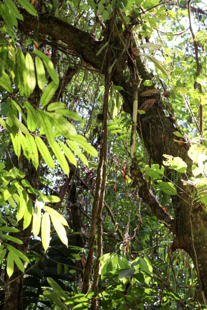 Du vert, du vert et encore du vert au Parc Piedras Blancas