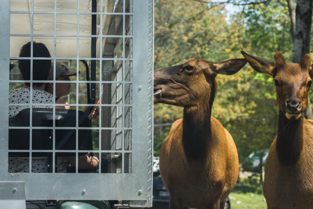 Au Parc Oméga, ce sont les hommes qui sont en cage