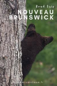 Nouveau-Brunswick, Pinterest