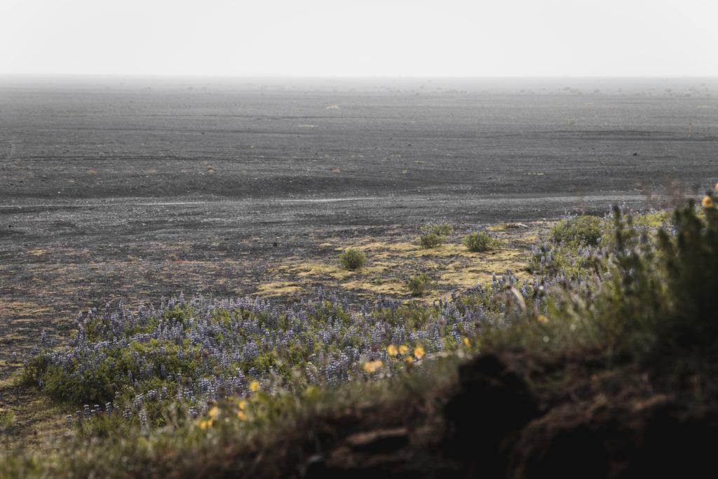 Islande | Le Cercle d'Or et les merveilles du sud - Hjörleifshöfði