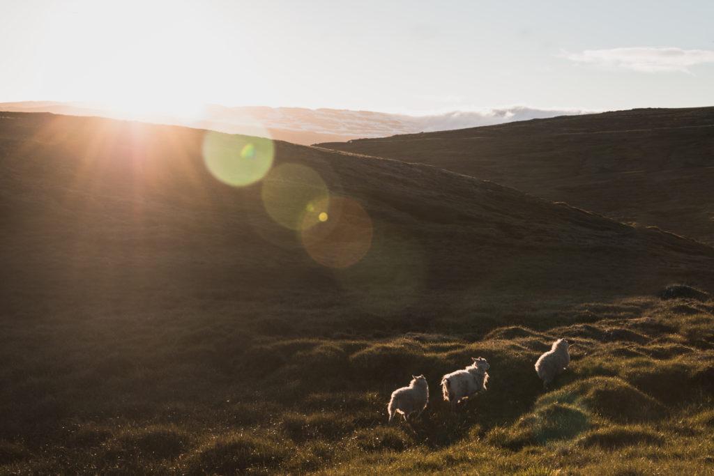 Islande | Les Fjords de l'Ouest