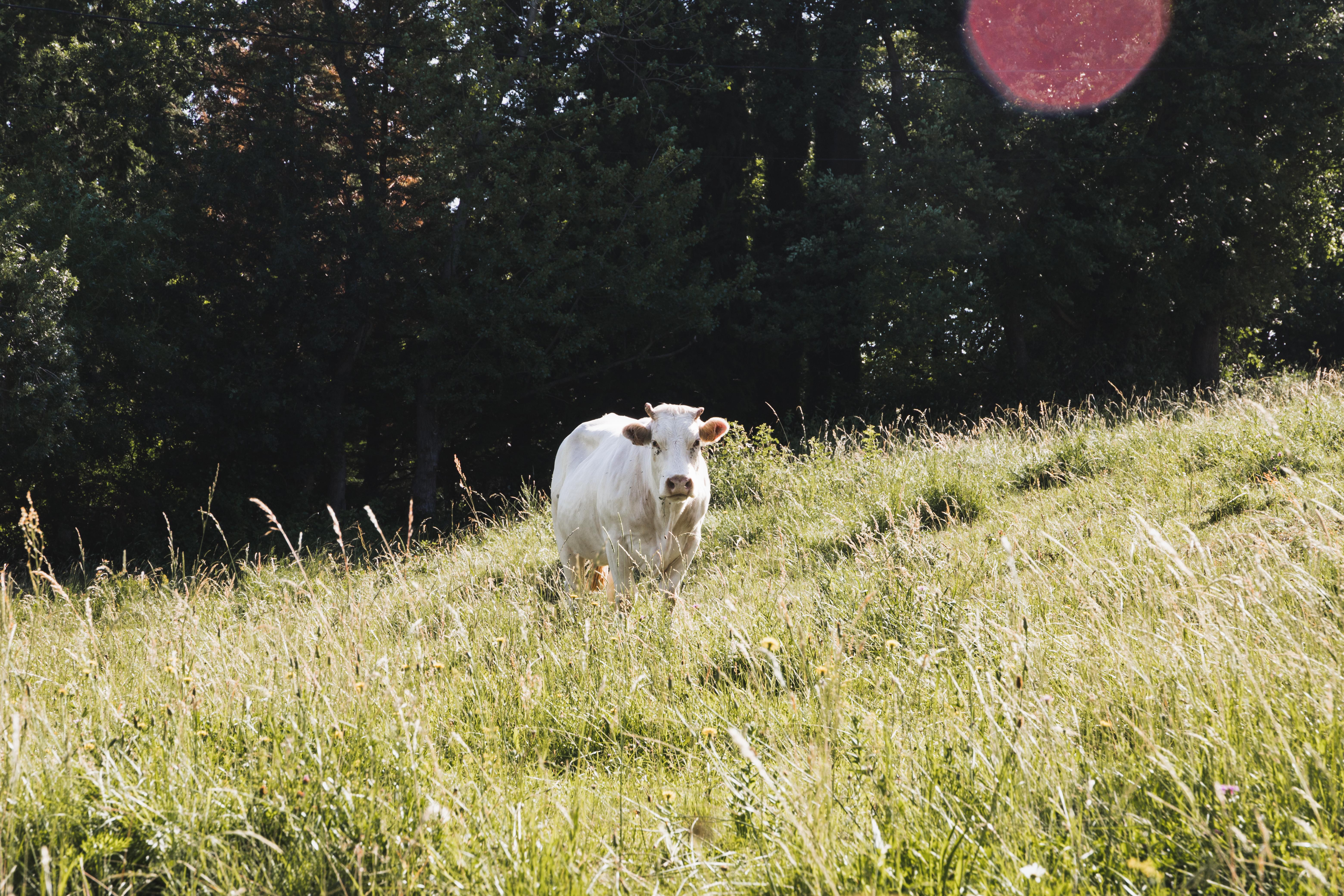 10 expériences à vivre en Ardèche Buissonnière