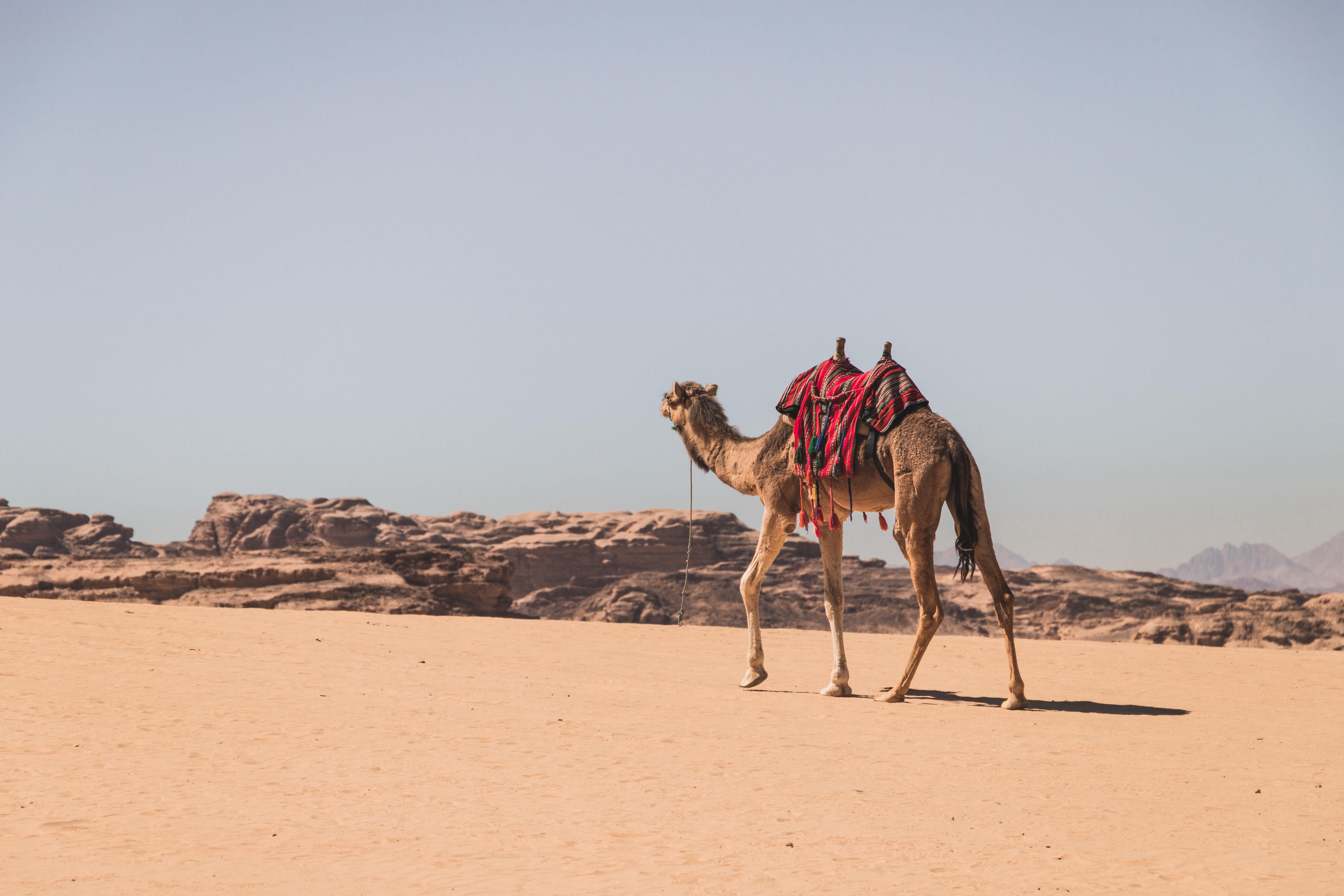 Jordanie | 2 jours & 2 nuits à Wadi Rum