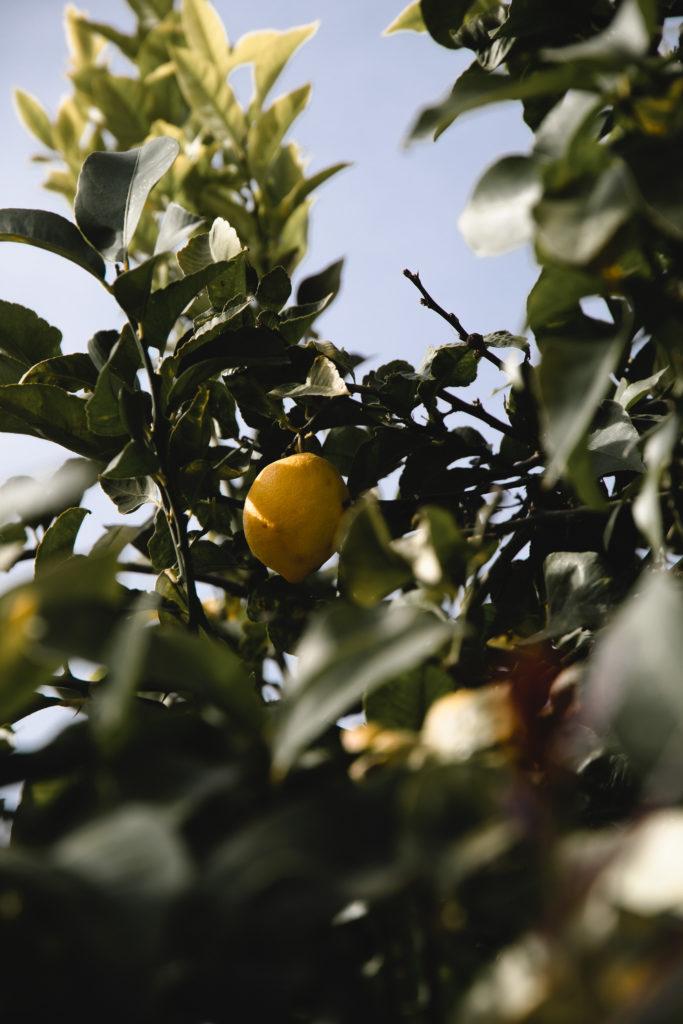 Citron Menton